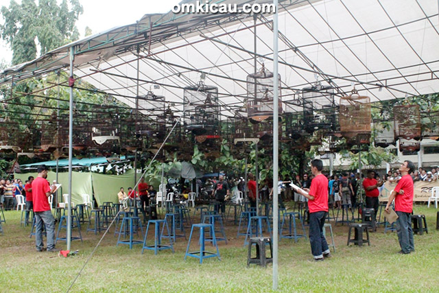 Lomba burung Menuju Piala Jaya Alumunium di Arcici