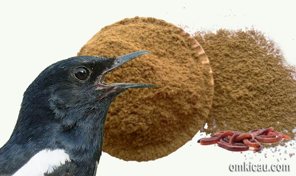 Tepung cacing untuk burung peliharaan