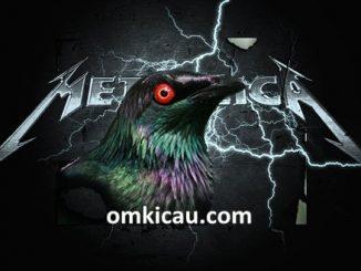 Aplonis metallica si burung metal dari timur Indonesia