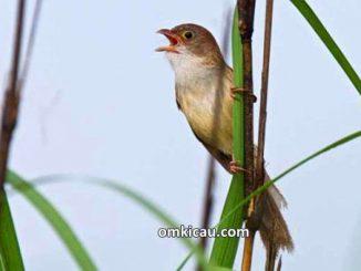 penemuan burung yang dianggap punah
