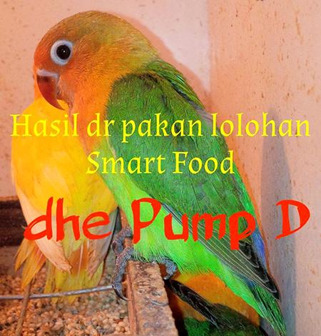 Lovebird hasil lolohan Smart Food