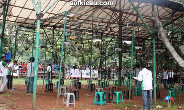 Road to Jayakarta Cup - kelas lovebird