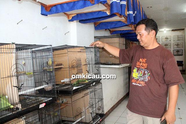 Breeding kenari TJM BF Bogor