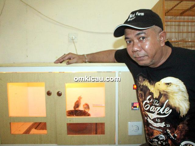Breeding cucakrawa MBR BF Bogor