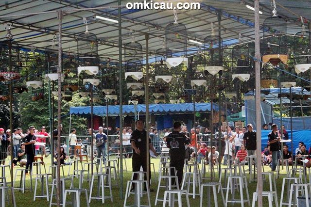 Wali Kota Cup Bogor - kelas lovebird