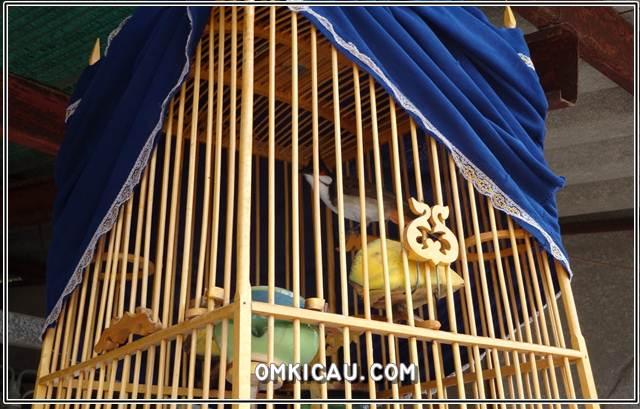 Aa 5 hal penyebab mengapa burung alami suara serak dan gangguan pernafasan