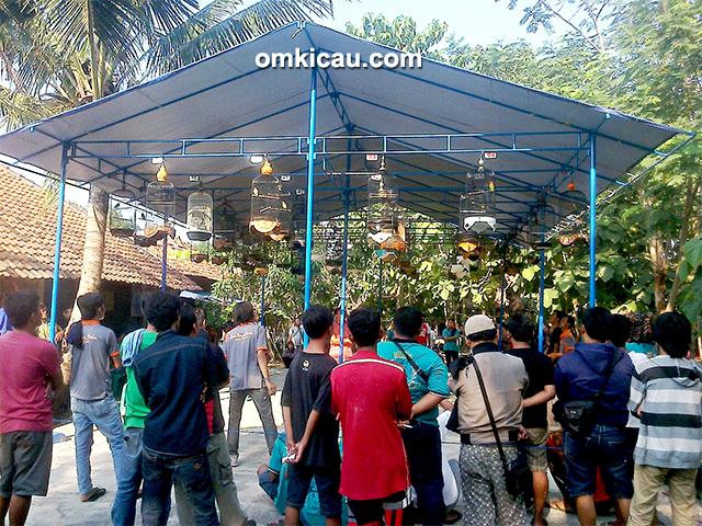 Latber Exclusive BBC Cirebon