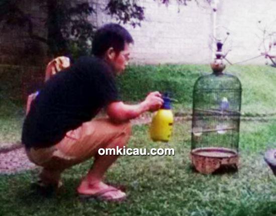 Om Ade merawat lovebird Jalal