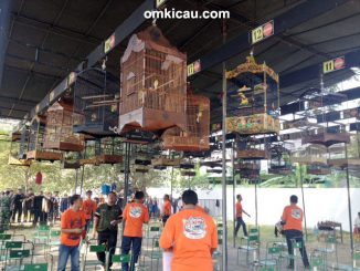 Kontes IKPBS Special Open Solo