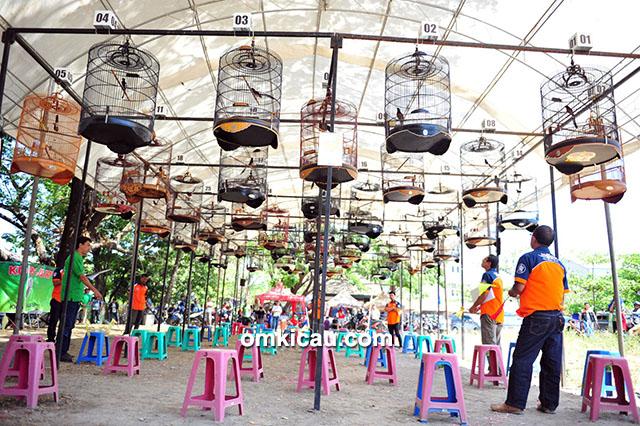 Proklamasi Burung Berkicau Makassar