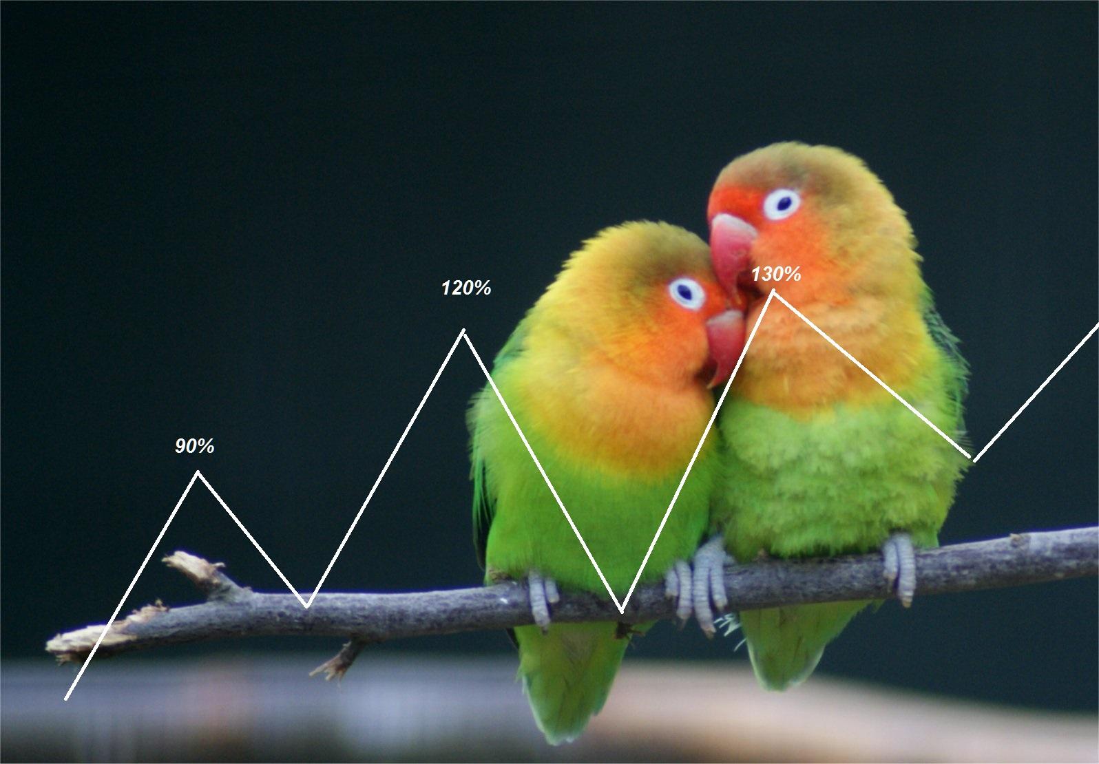 daftar harga burung terbaru