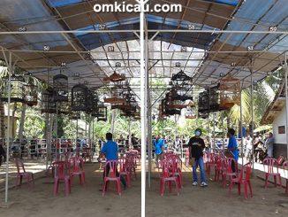 Gantangan Angsana Muda Bird Arena Cilacap