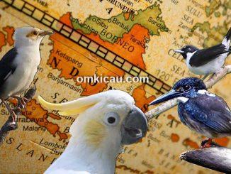 Berdasarkan data dari IUCN, Indonesia duduki peringkat 2 jumlah burung terancam punah di dunia