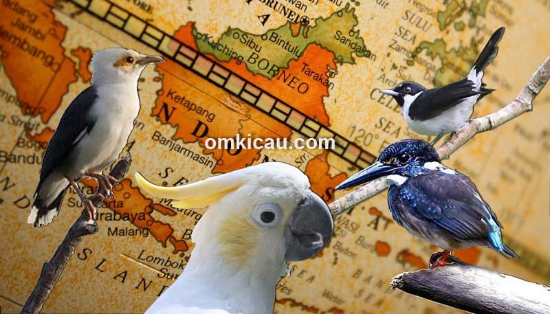 burung terancam punah di indonesia