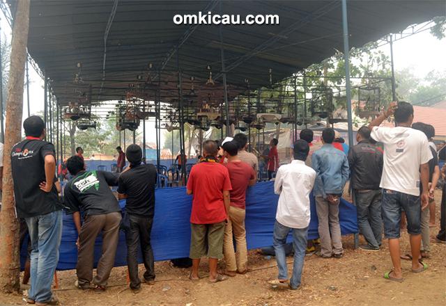 Oriq Jaya Cup - Kelas murai batu full gantangan
