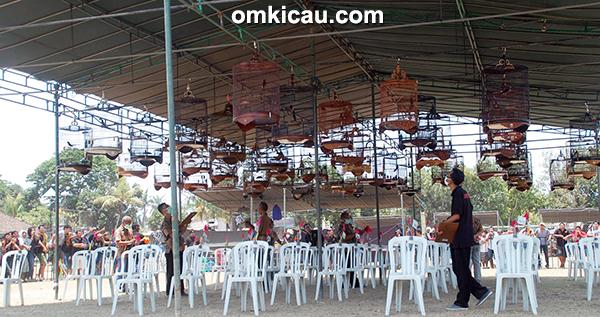 Jayatu Cup Denpasar - kelas murai batu