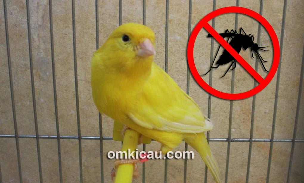 Tips pencegahan dan mengatasi gigitan nyamuk pada kenari