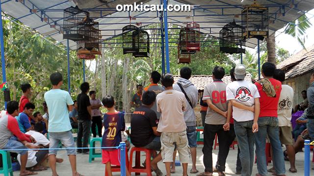 Latber Exclusive BBC Cirebon kelas kenari