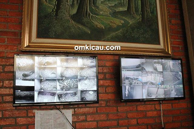 Breeder murai batu NSM BF Bogor