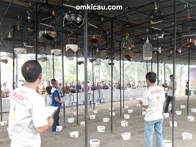 OIBC #13 Lomba Burung Berkicau Ofi Cup