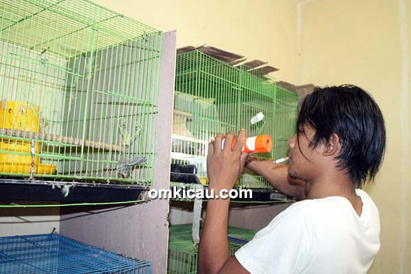 Breeding lovebird Doni Bos Team
