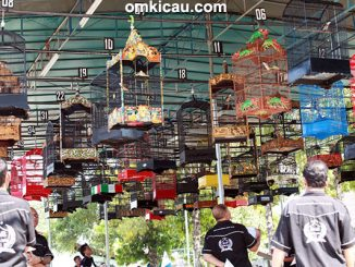 Lomba burung berkicau Warehouse BnR Cup Jogja