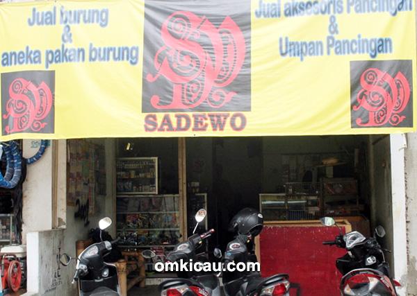 breeding murai batu Sadewo BF Jakarta