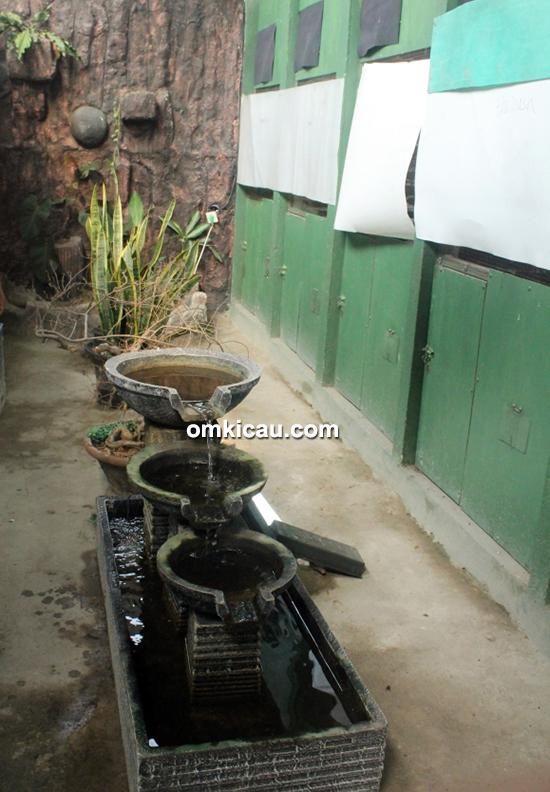 Breeding murai batu GMS BF Tangerang