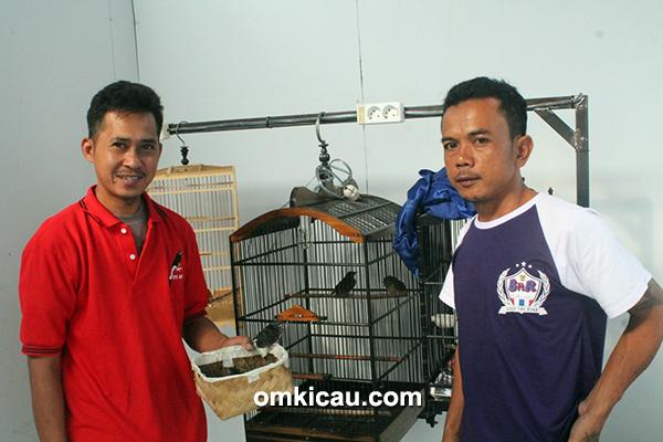 Breeding murai GMS BF Tangerang – Om Oter (kiri) dan Om Oleng panen anakan