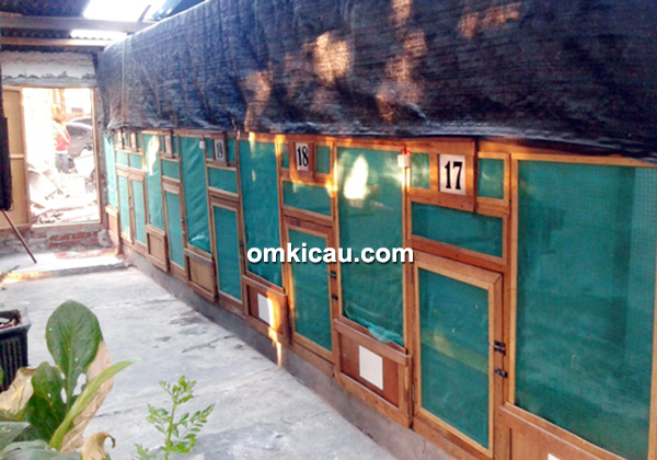 Breeding murai batu Eska BF Surabaya