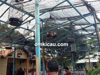 Latber Yudhistira BC Tegal - kelas lovebird