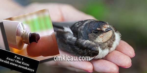 Memilih obat yang sesuai untuk burung