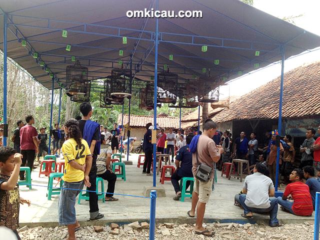 Latber BBC Cirebon - kelas murai batu