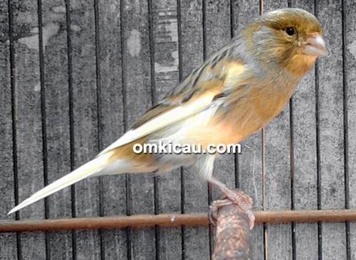 Figas Bird Shop