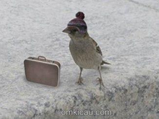 Tips aman bawa burung di perjalanan