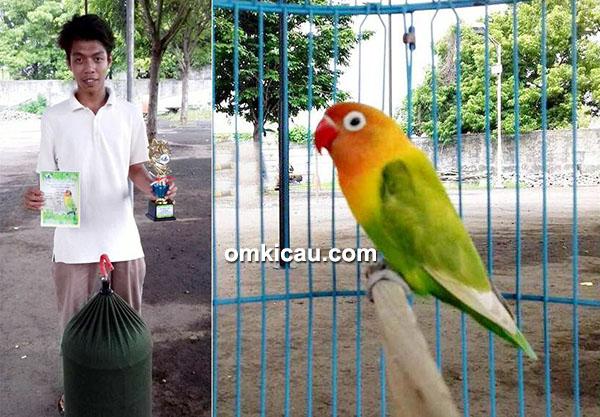 Lovebird Bocah Ajaib