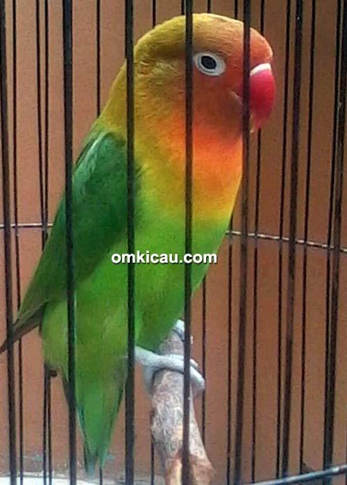 Lovebird Waljinah