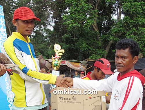 juara 3 merpati tinggian Shi Shuak Cup
