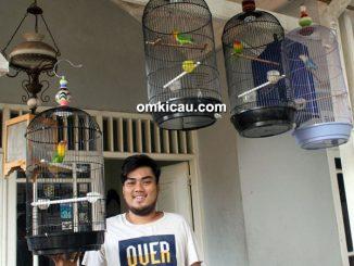 RMA Bird Shop - lovebird prospek