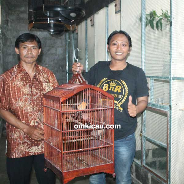 Breeding murai batu DMD BF Bogor
