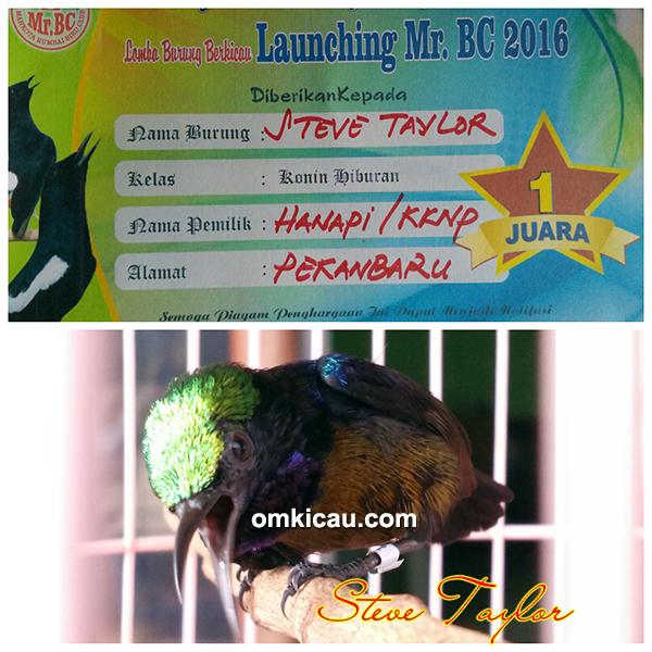 Kolibri ninja Steve Taylor