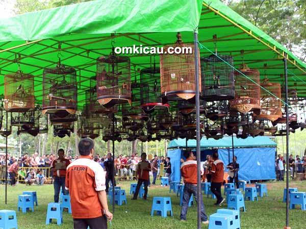 feat festival pekanbaru berkicau