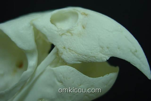 Struktur paruh burung