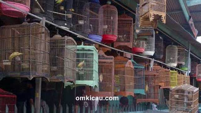Harga burung di pasar burung Jabodetabek