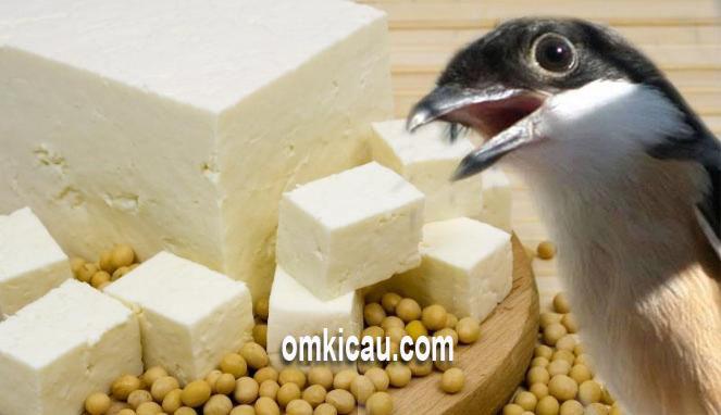 Tahu putih sebagai pakan tambahan alternatif untuk burung peliharaan