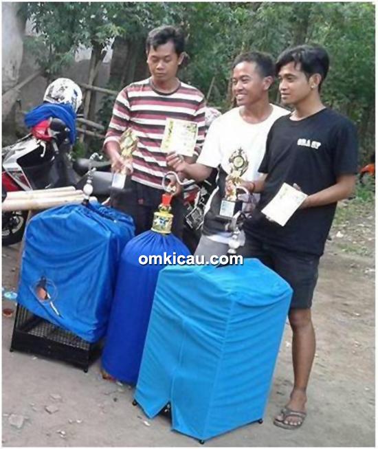 juara cucak ijo di Randu Alas BC