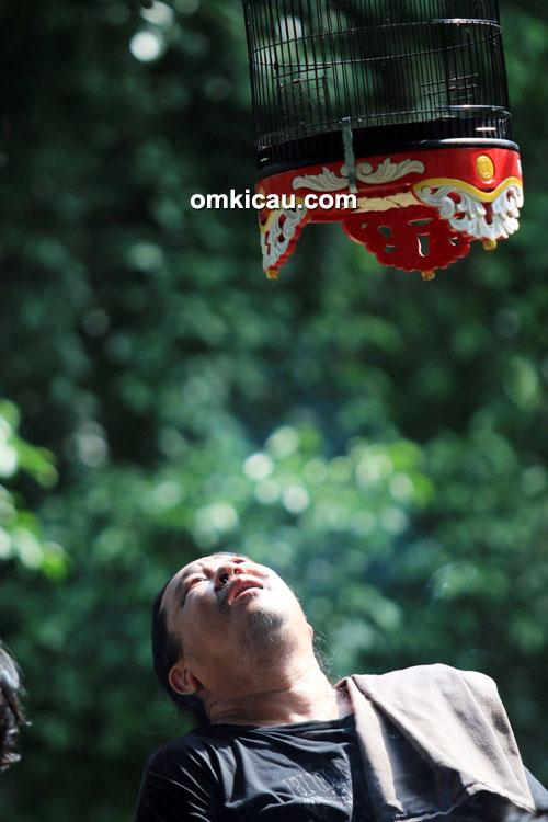 Om Ferry Yong menggantang lovebird Opium