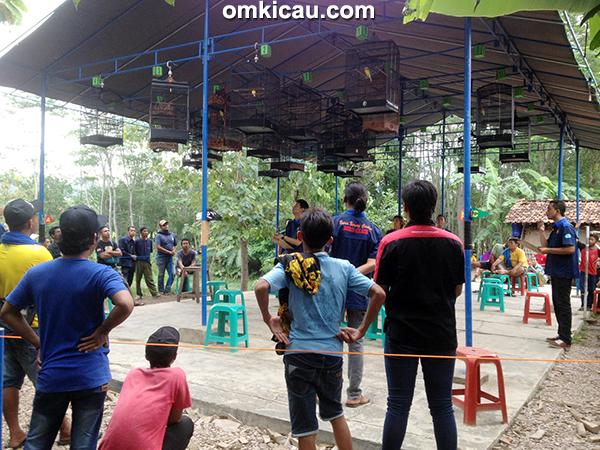 BBC Cirebon-kelas kenari