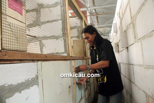 Breeding murai batu AFF GP BF Jakarta