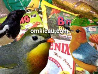 Cara memilih dan memberikan pakan voer yang baik untuk burung peliharaan